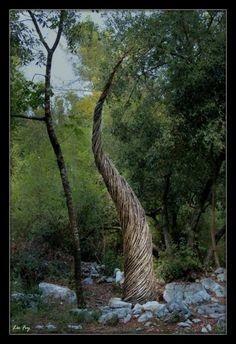 A Year in a French Forest. Sculpture No 7 Forest Sculptor Spencer Byles Ephemeral Art, Outdoor Art, Outdoor Spaces, Inspirational Artwork, Environmental Art, Natural Resources, Community Art, Natural World, Installation Art