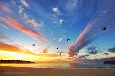 Google Image Result for http://116.118.248.45/wp-content/uploads/2008/06/bondi-sunrise-birds.jpg