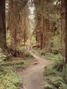 Hoh Rainforest | Washington State