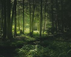HOME SWEET HOME (Rothrock Forest, August 112013 by Colin Gallagher...) | via Tumblr
