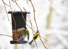 Quand arrive l'hiver, ne pas oublier de remplir les mangeoires pou aider les oiseaux du jardin à se nourrir.