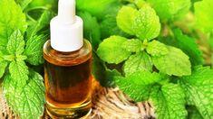 Meduňkový esenciální olej. Shingles Remedies, Natural Health Remedies, Home Remedies, Lemon Balm, Citronella, Korn, Vertigo, Medical Advice