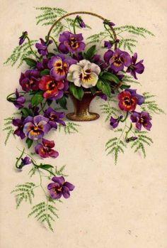Мои любимые цветочки