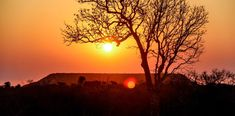 Haronga - un grande albero, di grande effetto! - Juliana Ravi Grande, Celestial, Sunset, Studio, Outdoor, Madagascar, Botany, Tree Structure, Outdoors