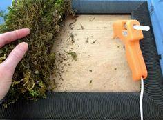 DIY Living Wall - Quick, Easy & Very Low Maintenance — Edible Walls Diy moss wall Diy Wand, Moss Wall Art, Diy Wall Art, Plant Wall Diy, Moss Plant, Moss Garden, Diy Frame, Diy Kits, Living Walls