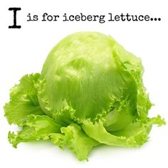 I is for iceberg lettuce! Crisp sweet and full of hydration this is a brilliant base for flavoursome salads wraps and sandwich fillers.... did you know that it belongs to the sunflower family?  Later on today we'll be bringing you a fun food crafting idea for your picky little eater as well as a simple & nutritious allergy friendly kids food idea...    Find out more about fun lettuce facts and why it's do good for you here (link in bio too): http://ift.tt/2o8owDx    More on what our A-Z…