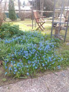 my blue garden