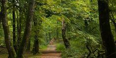 Rold Skov Rold Forest in Jutland, Denmark
