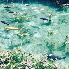 フランスの画家クロード・モネの名作「睡蓮」で描かれた池にそっくりな池が、日本にもあると話題なんです。思った以上に近場にある秘境にお出かけしてみませんか? Water Aesthetic, Aesthetic Images, Aesthetic Art, Aesthetic Wallpapers, Beautiful World, Beautiful Places, Half Elf, Nature Photography, Scenery