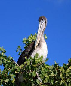 Writer's Wanderings: Galapagos Journal - Floreana Island, Post Office Bay