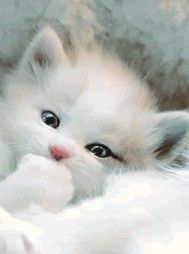 GIPHY is your top source for the best & newest GIFs & Animated Stickers online. Find everything from funny GIFs, reaction GIFs, unique GIFs and more. Cute Little Kittens, Kittens And Puppies, Baby Kittens, Cute Cats And Kittens, I Love Cats, Kittens Cutest, Baby Animals, Cute Animals, Gato Gif