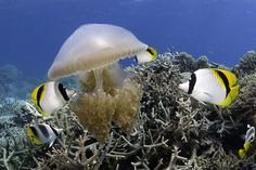 32 best under the sea images on Pinterest   Marine life  Ocean     Google Image Result for http   beyondmediaonline com wp content