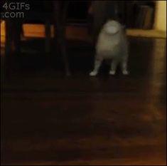 何かと思ったらwww  cat