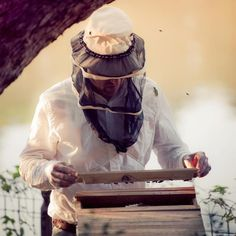 Notes from a Backyard Beekeeper