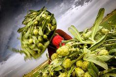 Navarra, estómago contento, paraíso de 'foodies'. una gastronomía exquisita y saludable que se nutre de los productos que proporciona el paisaje, y que combina los sabores de antaño con su fusión con las nuevas tendencias. => http://www.turismo.navarra.es/esp/organice-viaje/recursos.aspx?tipoBuscador=gv