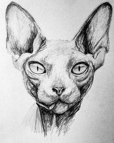 Sphynx by Nikostiel on DeviantArt Animal Sketches, Animal Drawings, Pencil Drawings, Cat Drawing, Drawing Sketches, Chat Sphynx, Gatos Cat, Sphinx Cat, Cat Sketch