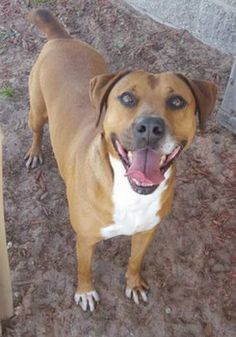 This girl is ALL smiles. Ruby loves laughter, long walks, and lots of kisses. It's time you said YES to a new best friend.