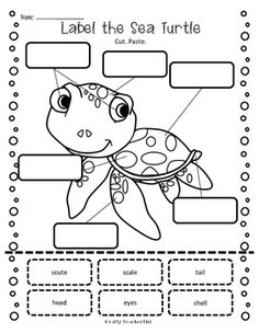 Sea Turtle Research Report Printables / Ocean Theme Sea Turtle Facts, Sea Turtles, Baby Turtles, Preschool Lessons, Preschool Activities, Reptiles, Amphibians, Turtle Book, Turtle Crafts