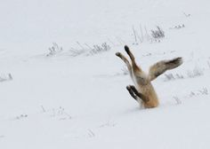 Finalists, 2016 Comedy Wildlife Photography Awards