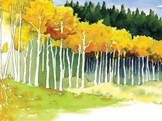 "Detail of ""Aspen Trees"" watercolor by the artist Waitsel http://www.creativeillustrator.net/"