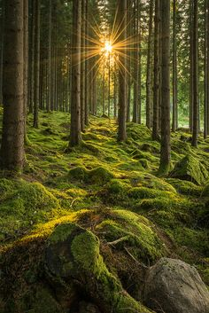 forest-nation: Shine on by Beautiful Forest, Beautiful World, Beautiful Places, Wonderful Places, Landscape Photography, Nature Photography, Image Nature, Nature Nature, Nature Aesthetic