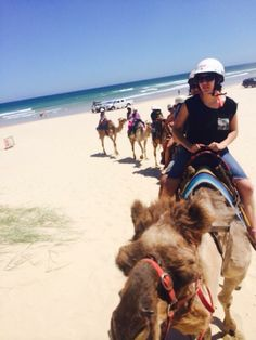 Camel riding, Port Stephen, Sydney, NSW AUSTRALIA
