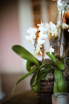 Orchids make me happy.