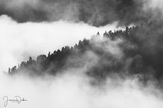 Mountain Photography, Black and White Photography, Black and White Print, Fog, Tree Photography, Nature Photography, Landscape Print, Office by JessDukePhotography on Etsy