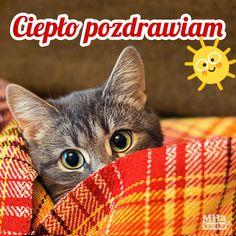 Weekend Humor, Cats, Funny, Autumn, Tattoos, Blog, Mornings, Gatos, Fall
