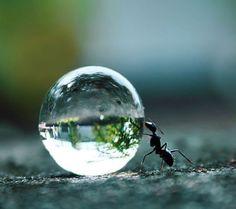 Boule de cristal, boule de cristal quel sera mon avenir ???