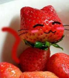 Chat Fraise