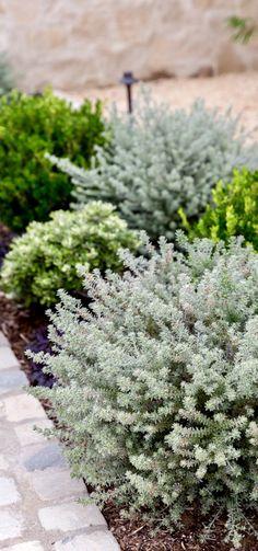 Garden Design Studios, Green & White Landscaping