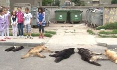 """Shame on Romania, for mass murdering dogs, and teaching their kids that this is """"OK"""". It's sickening."""