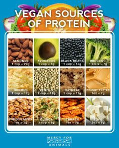 protine chart   Here is another chart of the plant-based foods high in protein that I ...