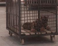 Stop Cruel Animal Performances at Xiangshawan Resort!