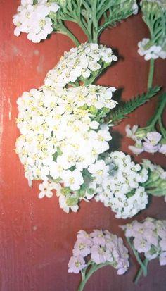 Kraut, Floral Wreath, Wreaths, Plants, Decor, Blog, Children Health, Apothecary, Medicinal Plants