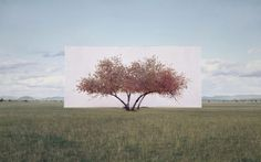 Myoung Ho Lee - Tree - Photographs of trees taken out of context.