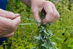 Frische Kräuter trocknen - Tipps & Tricks @ diybook.at Parsley, Herbs, Plants, Food, Drying Herbs, Fresh, Tips And Tricks, Health, Essen