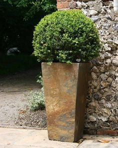 Made of natural slate, they blend well with all kinds of foliage and natural colours. The tall tapers can give height to design and help feature a plant, ideal for creating an impact at an entrance or framing a doorway. Large Plants, Green Plants, Potted Plants, Container Plants, Container Gardening, Plant Containers, Framing Doorway, Concrete Pots, Small Space Gardening