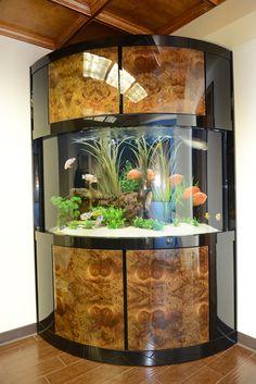 Office Aquarium, Houston, TX  Custom High Gloss Burlwood Freshwater Aquarium by Fish Gallery