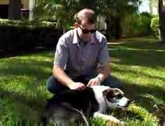 Benefits of Adopting a Senior Dog. please consider adopting a mature dog. senior is a term used by the shelters. many small breeds can live to 15-20 years. bigger breeds to 12-15 years. It's not the amount of time we live on this earth, but what we do with it. you will still need to establish your house rules.