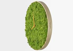 Naturally Beautiful Projects Made With Real Moss
