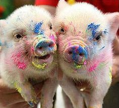 Funny Holi picture and Images..........