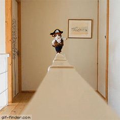 Pirate Cat   Gif Finder – Find and Share funny animated gifs