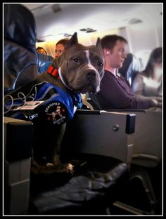 Therapy dog on the plane.