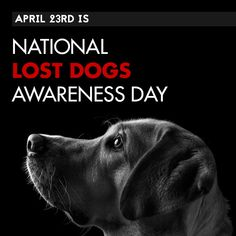 """April is National Lost Dogs Awareness Day This """"holiday"""" was created just in 2014 and today is all about prevention and how you can help lost dogs be found. It's also a day to celebrate the reunions that are made with the help of the public. Avon Ideas, The Reunion, Avon Brochure, Dog Facts, Love Your Pet, Avon Representative, Reunions, Losing A Dog, Social Networks"""