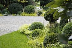 Ogród nie tylko bukszpanowy - część III - strona 12 - Forum ogrodnicze - Ogrodowisko