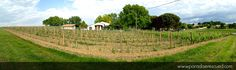 """""""Where new meets old"""" -  Amazing 180 degree panorama of the Hourcat Centre #Merlot block in Cardan Bordeaux. Spring 2015"""