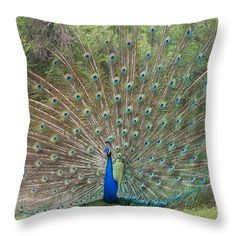 Peacock Large $25 by Marcela Martinez http://instaprints.com/products/peacock-large-marcela-martinez-throw-pillow-14-14.html