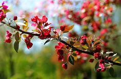magenta spring flowers background